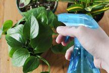 Home made plant help