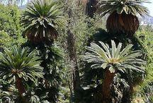 Palermo / Sicilia / Sicily / Some beautiful places of Sicily