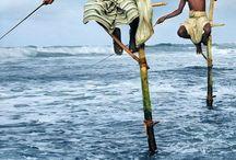 Vacanta exotica in Sri Lanka! / http://www.4anotimpuri.ro/