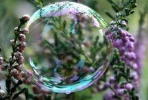 Soap bubbles | Zeepbellen