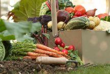 Garden - Vegetables, Planting Times, etc.