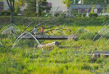 Roxhill Bog / Seattle Roxhill Bog, Wetland park. WERK | Charles Anderson Landscape Architecture