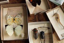 Insekt & Animals