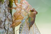 Insects and such things / Insects  / by Deborah Hardin