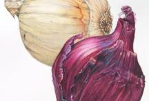 Art/Ботаническая иллюстрация