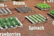 овощные грядки