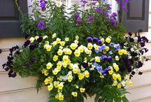 Flores q eu amo