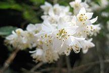 花木  Blossoming Trees