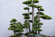 Bonsai / by verre by julie burton