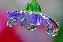 Water Drops / Amazing water droplet photography