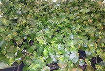grønne planter med navn