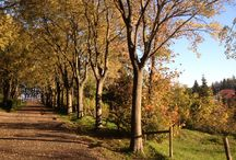 Autumn in my city / Beautiful landscapes
