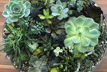 Terrarium and succulents