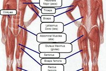 Anatomy diagram