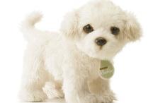 perritos lindos y tiernos