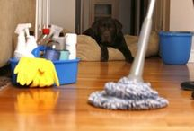 Limpezas Úteis que você precisa saber