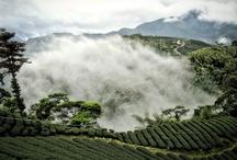 Field of tea of Taïwan / champs de thés a Taïwan .Christine  Dattner la French touch du thé depuis 35 ans / Christine  Dattner la French touch du thé depuis 35 ans www.christinedattner.com