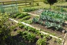 Vegetables - an amateur cast, but the plot thickens / Pins from work on the vegetable patch.
