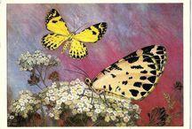 Postcards - butterflies
