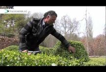 Tuin video's // Gardening video's / Video's over tuinieren // video's about gardening