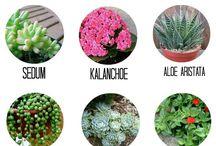 Souvenirs con plantas