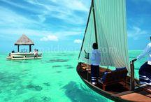 Taj Exotica / Maldivler Taj Exotica island Resort Maldiv otelleri arasında en geniş Lagün'e sahip otellerinden biridir. Bu tropikal ada, önceden three coconut adası olarak bilinirdi, etrafı kristal mavi deniz ve yabani tropikal bitkilerle çevrilidir. Hint okyanusunun sonsuz görüntüsüyle, bu manzara, burayı özel bir tatil yeri yapar. Tesis hakkında daha detaylı bilgi için; http://www.maldiveclub.com/maldivler-otelleri/taj-exotica