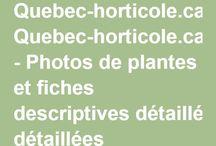 Quebec-horticole.ca - Photos de plantes et fiches descriptives détaillées