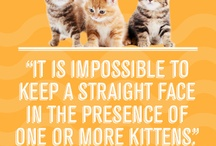 Pet Postcards