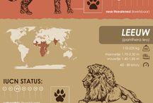 Wildlife   infographics
