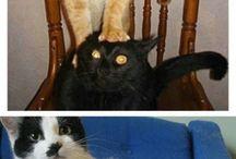 Super funny