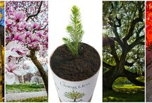 Living Urn / Pics of The Living Urn ~ Grow a living memory tree from your loved one's cremated remains!