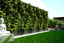 Terrace Garden / Mycloudforest specializes in designing and creating terrace gardens for urban homes.