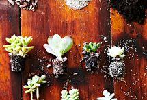 flora / by Audrey M. Jameson