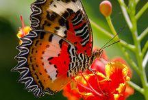 Бабочки/ Насекомые