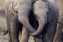 Elephants for life / by Christine Fischer