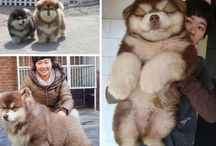 precious pooches and pets