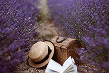 Lavender+Hourseback Photo Shoot Concept