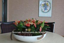Anthurium planten arrangementen