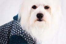 Mad For Pet Italia / #madforpetforever #madforpet #italia #df #anteprima #collezione #autunno #inverno #gattinara #venezia #fashion #dogs  donatella.madforpet@gmail.com www.madforpetitalia.it