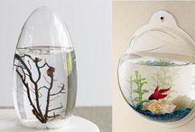 Aquariums N Critters
