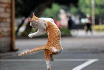 Animals - Cats Dancing