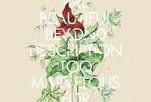 Typography  / by Kristina Stanton