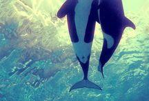 Yunuslar, balinalar. ...