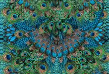 Peacock World / New Room