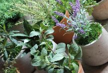 Artificial Herb Pots - Interior / We can put together an eclectic mix of pots with and assortment of Artificial Herbs, Ferns and Ivies for Dressing Window Displays, Retail Displays and Shelving in Restaurants, Pubs and Hotels