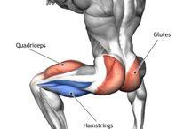 Kuntosali liikeet / Kuntosali liikeiden lihaksiin kohdistus