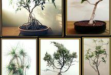 cactus, succulents and bonsai..