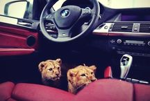 Funny animals & cars