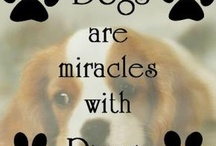 dogs / by Michelle Southard