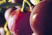 GARDEN  Grapes & Wine / by Diane Salter